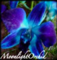 MoonlightOrchid